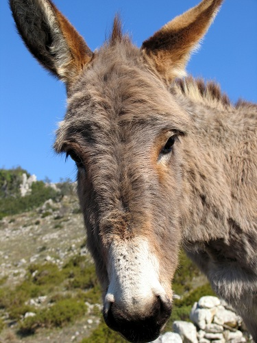 Donkey in a sanctuary