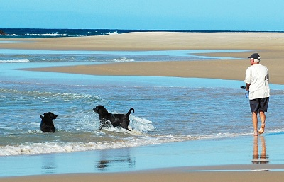 Dogs with man on beach Algarve Portugal