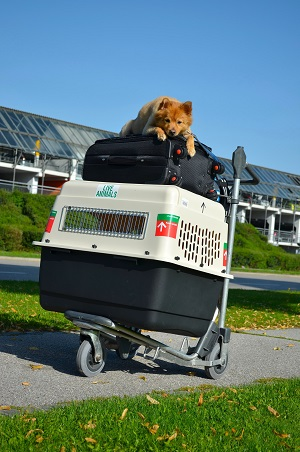 Dog and luggage