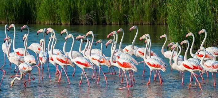 Pássaros da Ria Formosa