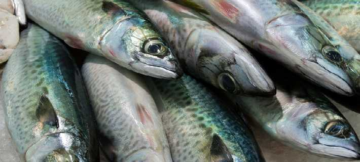 Algarve Mackerels